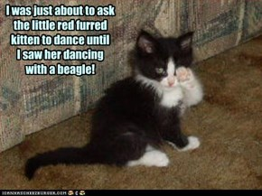 I was just about to ask the little red furred kitten to dance until I saw her dancing  with a beagle!