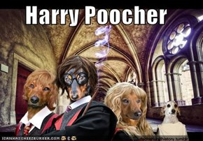 Harry Poocher