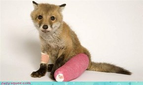 Poor lil foxy