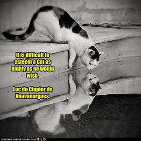 It is difficult to esteem a Cat as highly as he would wish.  Luc du Clapier de Vauvanargues.