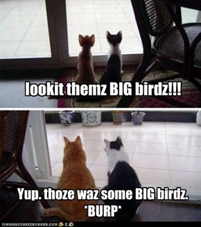 lookit themz BIG birdz!!!