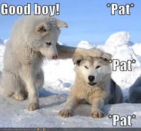 Good boy!                 *Pat* *Pat* *Pat*