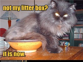 not my litter box?      it is now.