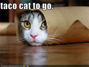 taco cat to go.