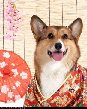 Finkin ob mai frenz ober in Japan