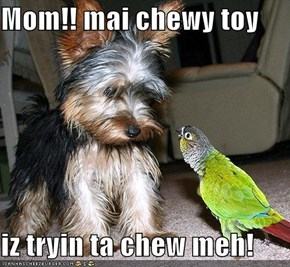 Mom!! mai chewy toy  iz tryin ta chew meh!