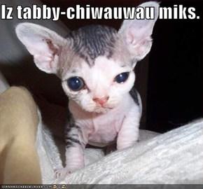 Iz tabby-chiwauwau miks.