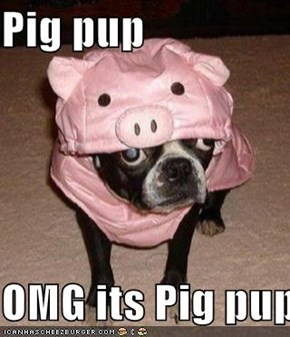 Pig pup  OMG its Pig pup