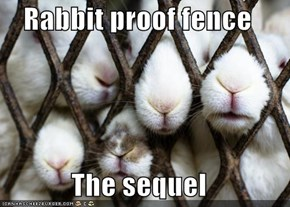 Rabbit proof fence  The sequel