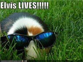 Elvis LIVES!!!!!