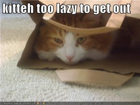 kitteh too lazy to get out