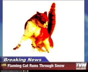 Breaking News - Flaming Cat Runs Through Snow