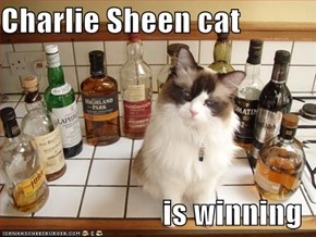 Charlie Sheen cat  is winning