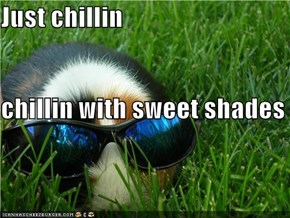 Just chillin chillin with sweet shades