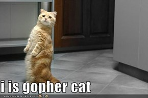 i is gopher cat