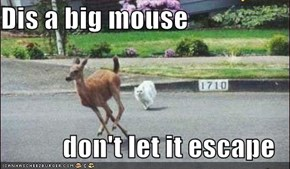 Dis a big mouse  don't let it escape