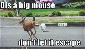 Dis a big mouse  don't let it escape