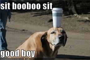sit booboo sit  good boy