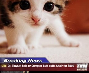 Breaking News - Dr. TinyCat help ur Cumpter Butt outta Chair fur $500