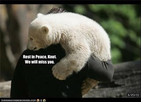 Rest in Peace, Knut. We will miss you.