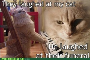 They laughed at my cat