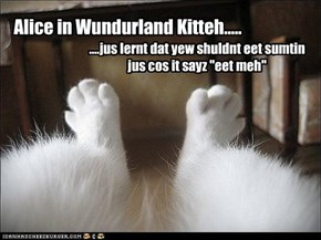 Alice in Wundurland Kitteh.....