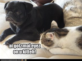 ai gotz mai eyez on u kitteh!
