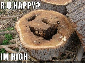 R U HAPPY?  IM HIGH