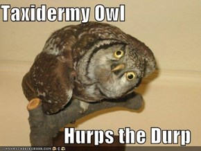 Taxidermy Owl  Hurps the Durp