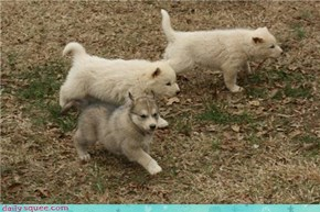 Squee Spree: The Three Wolfsketeers
