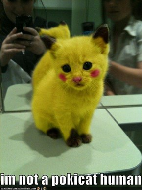 im not a pokicat humans