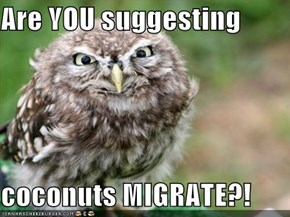Are YOU suggesting  coconuts MIGRATE?!