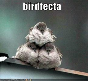 birdfecta