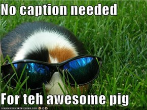 No caption needed  For teh awesome pig