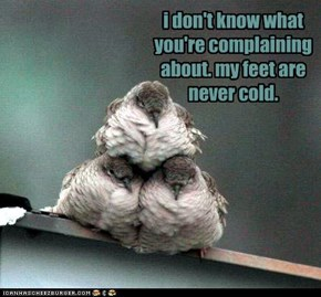 i don't know what you're complaining about. my feet are never cold.