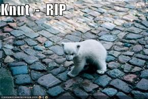 Knut  -  RIP