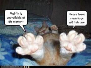 Hello? Muffin?