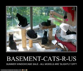 BASEMENT-CATS-R-US