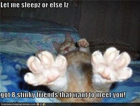 Let me sleepz or else Iz  got 8 stinky friends that want to meet you!