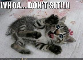 WHOA....DON'T SIT!!!!