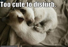 Too cute to disturb.