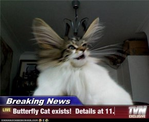 Breaking News - Butterfly Cat exists!  Details at 11.