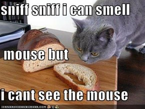 sniff sniff i can smell  mouse but i cant see the mouse