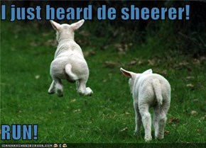 I just heard de sheerer!  RUN!