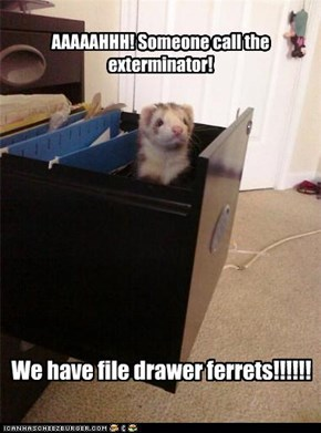 file drawer ferrets are unwelcome in offices.