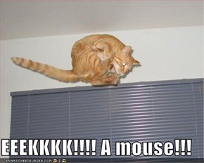 EEEKKKK!!!! A mouse!!!