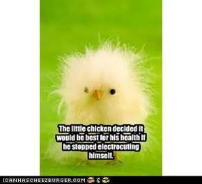 sparky chicken