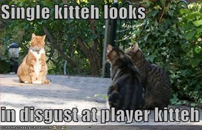 Single kitteh looks  in disgust at player kitteh