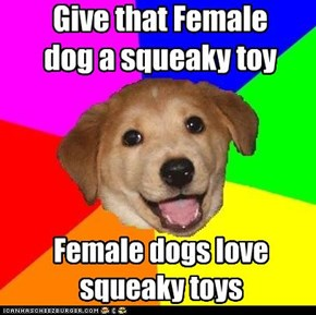 Give that Female dog a squeaky toy