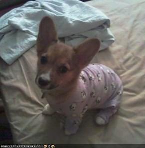 Cyoot Puppeh ob teh Day: Jus anudder layzee Sundog